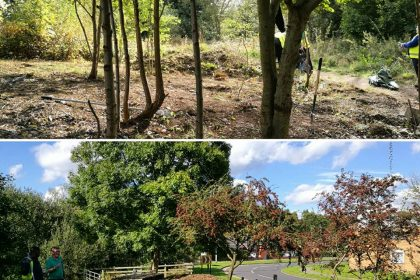 Lifford Woodland Project in 2017